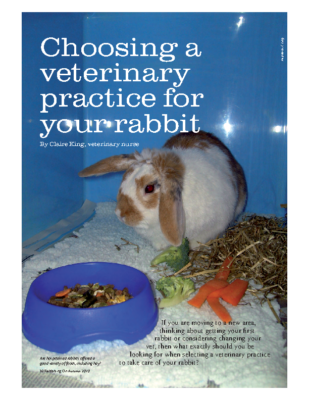 Choosing a veterinary practice for your rabbit