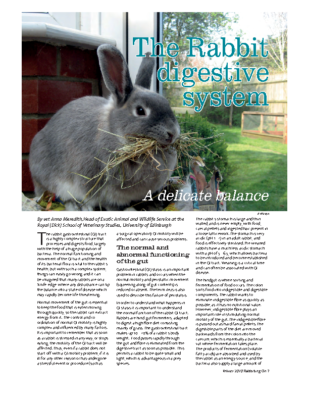 The Rabbit digestive system