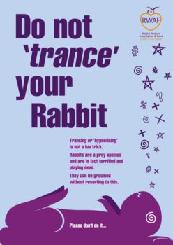 Do not trance your rabbit