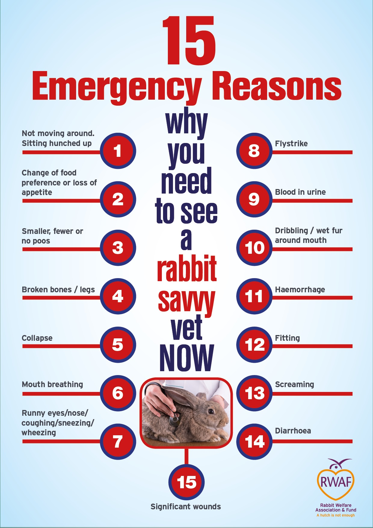 15 Vet Emergency Symptoms
