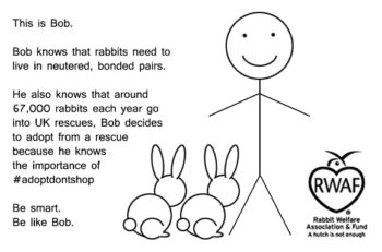 This is Bob. Bob knows that rabbits need to live in neutered, bonded pairs. He also knows that around 67,000 rabbits each year go into UK rescues, Bob decides to adopt from a rescure because he knows the importance of #adoptdontshop Be smart. Be like Bob