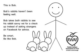This is Bob. Bob's rabbits haven't been feeling well. Bob takes both rabbits to see his rabbit savvy vet for a check up instead of asking strangers on Facebook for advice. Be smart. Be like Bob.