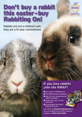 Don't Buy A Rabbit This Easter