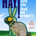 Hay! Feed Me Properly