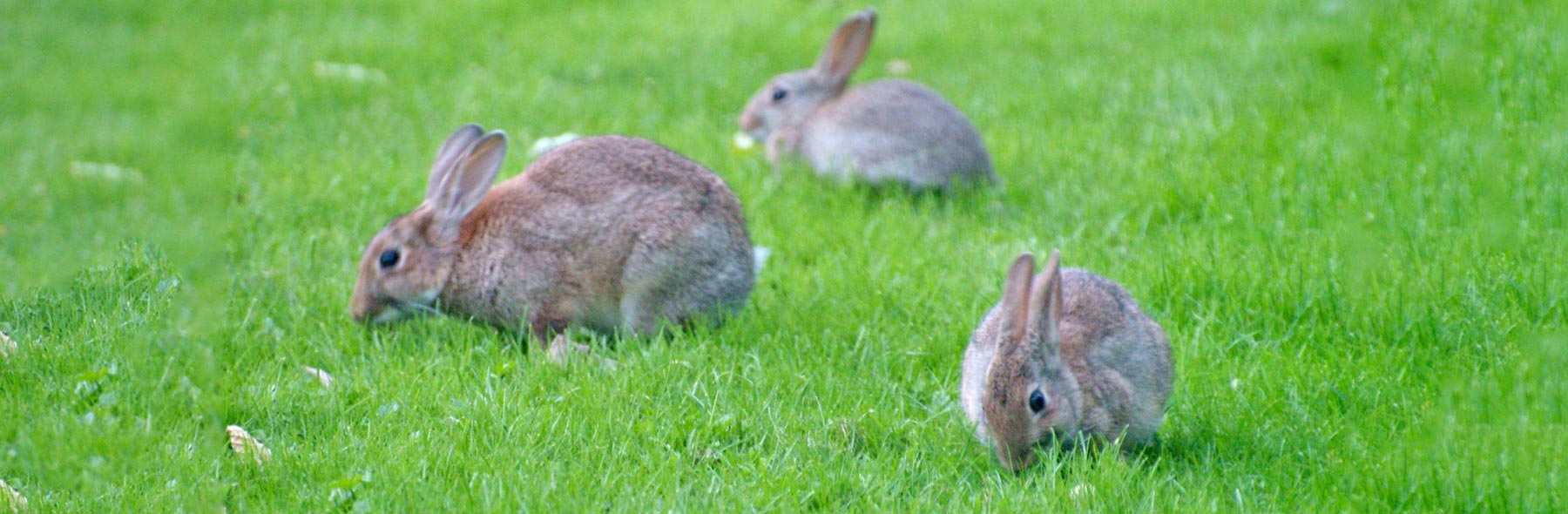 Skin and Fur Parasites – Rabbit Welfare Association & Fund