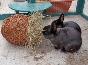 Hay! The Grass Roots – Rabbit Welfare Association & Fund (RWAF)
