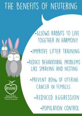 The Benefits of Neutering