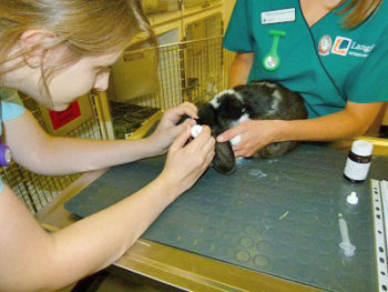 Neutering – Castration and Spaying – Rabbit Welfare Association