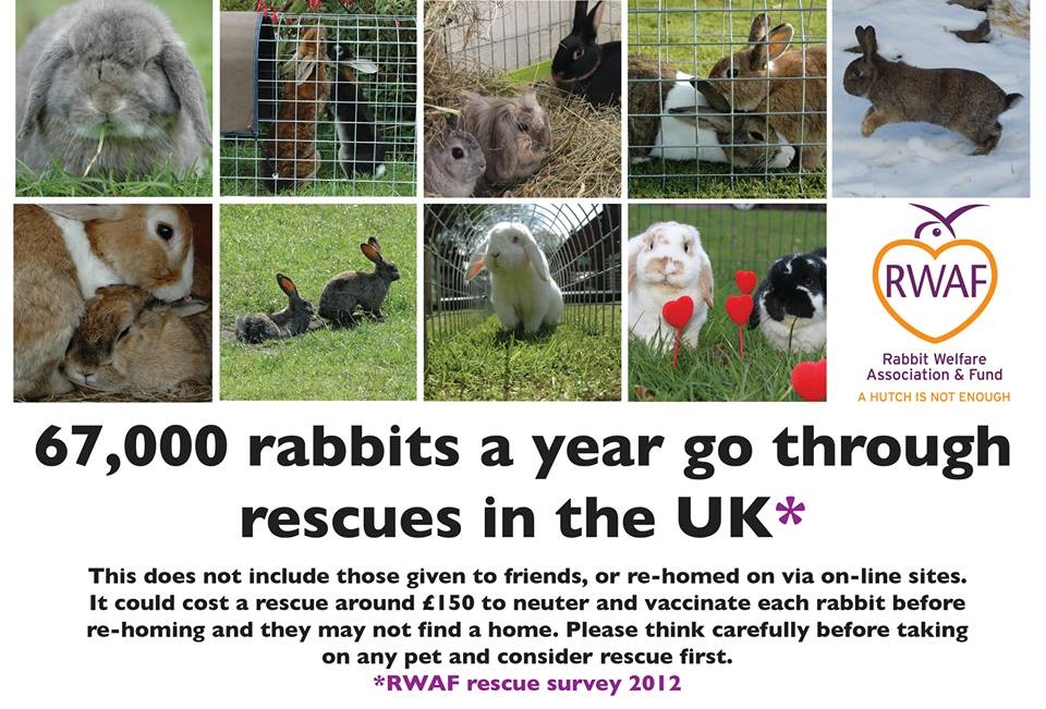 67000 a year in rescues