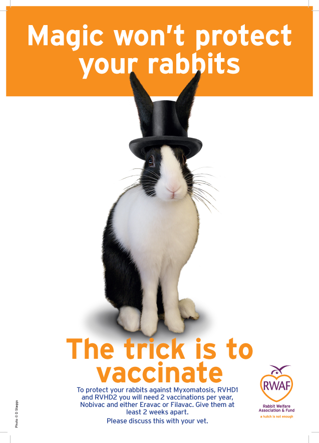 Magic won't protect your rabbits Poster V3