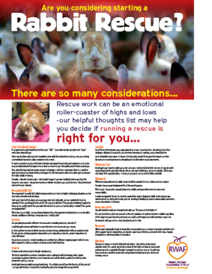 Rabbit-rescue-poster-2